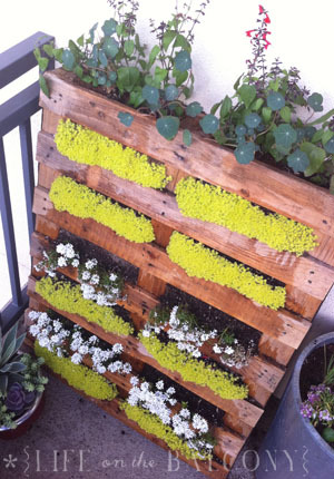 Balcony Garden in an upcycled wooden pallet (via Photos of My Pallet Garden)