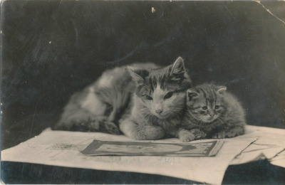 blueruins:  Vintage cats, 1912
