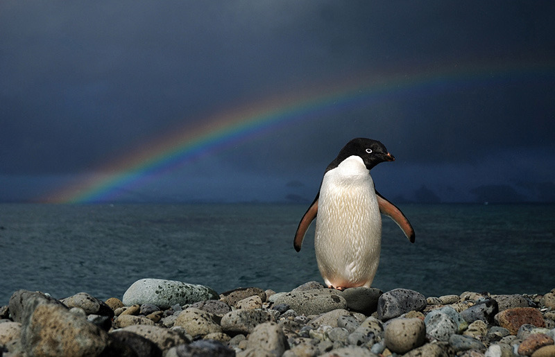 magicalnaturetour:  Under the Antarctic Rainbow by Piotr_Angiel :)
