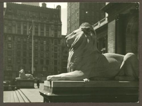 Check out this great historic photo of our library lions Patience and Fortitude, taken sometime between 1910 and 1960 outside of our landmark 42nd Street building. The image was captured by the famous Wurts Brothers, and is now in our Irma and Paul Milstein Division of United States History, Local History  and Genealogy. It's also in our Digital Gallery - hey, did you know you can buy prints of any image in the Digital Gallery? You can make your home or office nicer while supporting NYPL. And right now, in honor of the 42nd Street building's 100th birthday, you can get 20 percent off your next purchase if you use the code Yes100 at checkout! So buy yourself something nice!