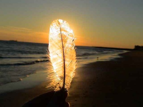 sunsurfer:  Feather Sunset, Normandie, France  photo via hopefullyenough