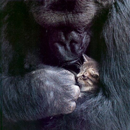 cute-baby-animals:  OMG….THIS CAN'T BE REAL LIFE.  THIS IS TOOO CUTE TO EXIST.