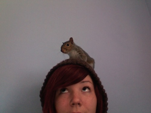 "Another squirrel rescue! This is from reader Rebeka P.:  His name is Ax, or Axeman. (An Amebix song named ""Axeman"" inspired that: lock up your acorns, the  Axeman is coming!) I kept him in my shirt for a  week or two straight when he wasn't sleeping in his nest. He was very  small, eyes just barely opened, and we woke up at all hours of the night  to feed him. We released him before the winter since he seemed ready to  go, more eager to get outside. After a few trial runs of him being  outside for three hours while I sat and watched him in the trees crying  because I was scared he was too high up or that he would never come  back, we brought his cage and his nest and lots of nuts outside for him  and let him do his thing. We have a squirrel food basket hanging in a  tree in the woods full of goodies for him, and other squirrels, so he  would have a steady flow of food through the winter since he didn't have  all spring and summer to collect nuts and stash them away. We see him  sometimes up in the trees. I miss him so very much but am so happy to  have had his company. He enjoyed cleaning me, digging in my hair, laying  on his belly on my head and spinning around in my hair, hiding acorns  in my clothes, and playing with stuffed animals. He was the cutest and loveliest creature I've ever had the  pleasure of caring for.""  Rebeka also says that the Squirrel Board has good resources on how to raise a squirrel adding, ""squirrels are not pets, they do 'wild up' and are a LOT of work even  just to raise them! Lots and lots of work and time with them. They're  cute, cuddly and awesome but they belong in the trees."" I didn't realize everyone and their mom was rescuing squirrels! I'm so jealous! What's up with these squirrel parents though? We need a squirrel social services. Or maybe people just need to stop hitting squirrels with their stupid cars. Vegansaurus friend and super squirrel foster mom, Livia, is taking care of these two adorable critters: The furless guy is a storm victim; his nest was blown down. The older one's mom was dead in the street and he fell out of the nest looking for her. Now please excuse me while I go punch a bunch of people and then cry forever."
