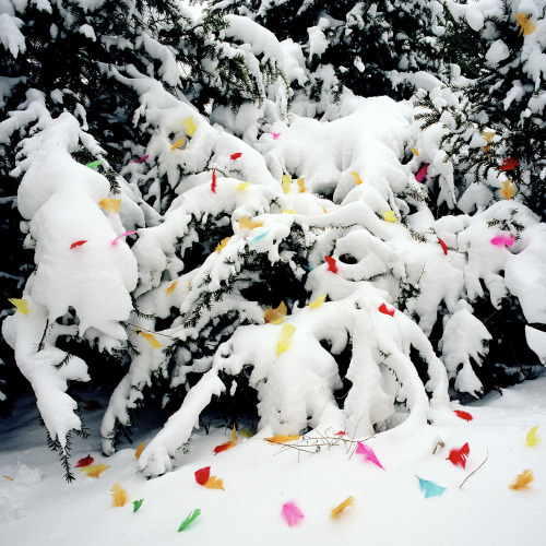 Feathers in snow, 2007 Jakob Hunosøe