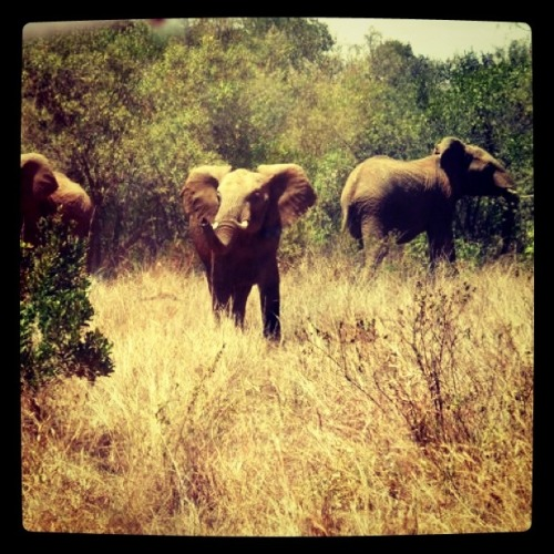 When I was in Africa, I Instagram(m?)ed these elephants.   For you.   I know.   You're welcome.