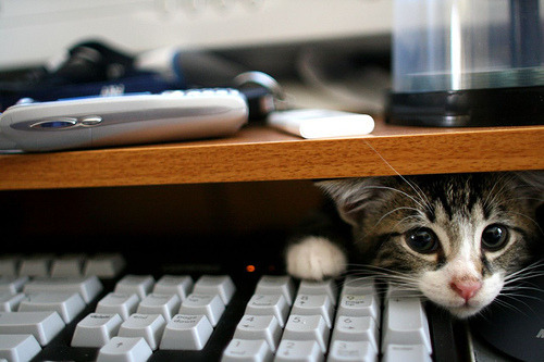 wedontlikemoose:  kitty, what are you doing there.