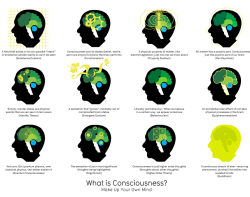 What is Consciousness? via Information is Beautiful