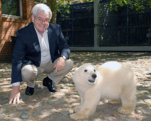 "Fmr. House speaker Newt Gingrich, mourning the death of Knut, the Berlin Zoo's celebrity polar bear.  ""Callista and I were sorry to learn of the unexpected passing of Knut this weekend. We had the pleasure of visiting him in May, 2007,"" Gingrich wrote on Facebook."