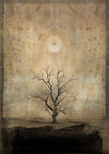 neutralnotes:  Mystic Tree by Daniel Colvin Fine Art