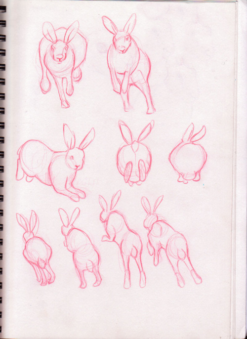 I drew so many hares yesterday O_O