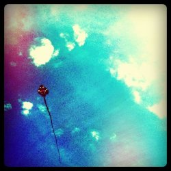Break these earthly bonds and soar. #kite #sky (Taken with instagram)