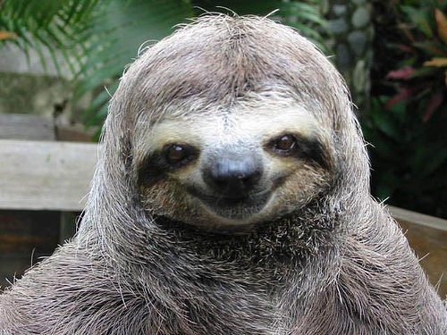 Wanting someone to buy me a sloth. It'd make my day.