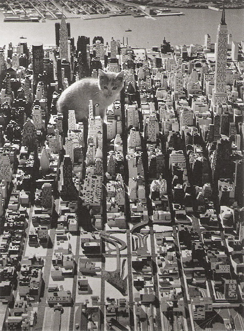 Kitty in the city