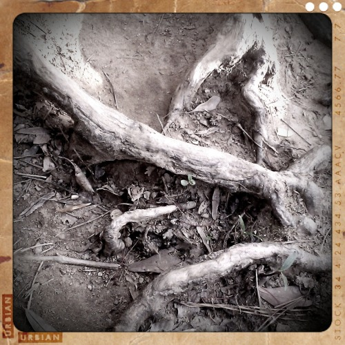 Bonesby Wendy Darling Worn out roots in eroding soil by the lake in Lullwater Park.