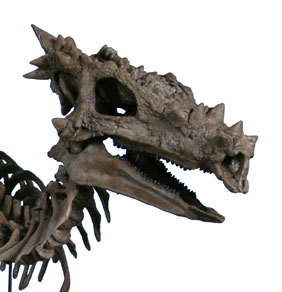 "goodkernel:  Dracorex hogwartsia, ""Dragon king of Hogwarts"" It is known from one nearly complete skull and a few vertebrae. These were discovered in the Hell Creek Formation in South Dakota. It is now suspected to be mearly a juvenile form of Pachycephalosaurus. Regardless, this creature wins the prize for the dinosaur with the coolest name."