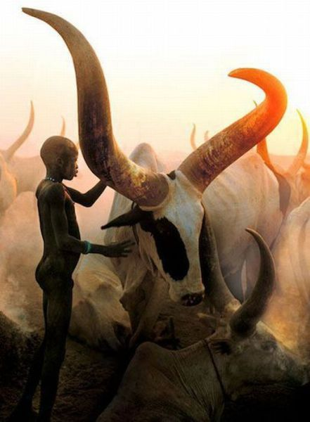 Dinka: Legendary Cattle Keepers of Sudan