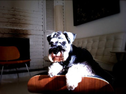 @EamesDog catching some rays…