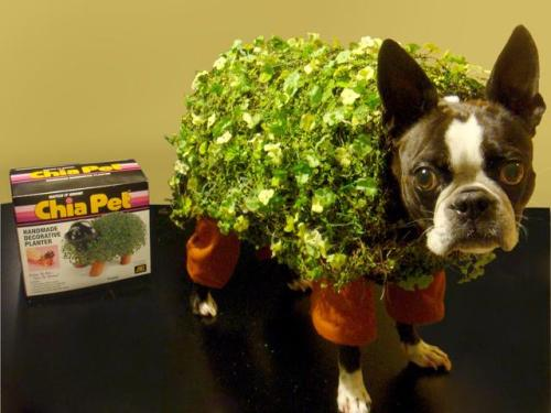 best. chia. ever.