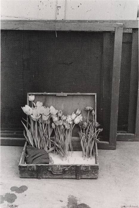Robert Frank  Suitcase of Tulips, 1950  Gelatin silver print (black & white) 15 7/8 x 11 7/8 inches\ Thank you, yama-bato.