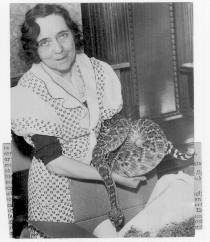 Grace Wiley: Snake Lady When Minneapolis opened its first downtown library in 1889, it housed the Athenaeum, Society of Fine Arts and the Academy of Science on the 4th floor of the building at 10th and Hennepin. Grace Wiley was a member of the Minnesota Academy of Science and also curator of its collection of animals. She started working with reptiles in 1922 and after the Academy disbanded in 1928, the museum continued on, under the library's control.  In 1928 Wiley was bitten by one of her animals and spent several days in the Minneapolis General Hospital. Wiley and the reptiles moved to the Chicago Zoological Park in Brookfield, Illinois in 1933.   Wiley lost her job in Chicago when she left the cobra cage open after cleaning it and moved to Long Beach, CA. In Long Beach, Grace amassed a large collection of reptiles, doing serious work on the study of the reptiles and also loaning out 15 foot long King Cobras to movie studios. In 1948, while showing her snakes to a photographer from True Magazine, Wiley attempted to get a new cobra to spread its hood in attack position for a photograph.  The cobra finally obliged and then struck Wiley on the finger.  Ninety minutes later she was dead.