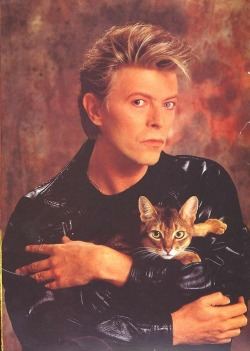 Bowie & kitty. This is what love is made of.