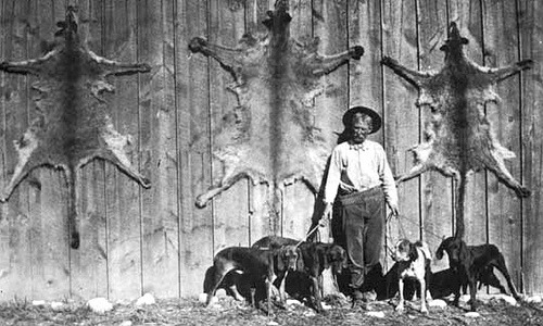 Trapper Jim Owens, American explorer around 1900 (by Hollywood - Sign) was well known for his predator control activities on the Kaibab National Forest,Arizona, in the early 1900's.