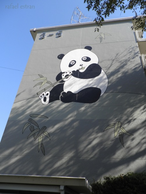 cute panda in my building in japan, sayamadai-danchi 3-5 <3