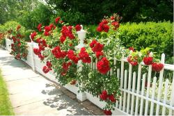 While we are in England, here is a PERFECTLY GORGEOUS FENCE that you might stroll happily past, were you fortunate enough to be in Southport, a seaside town in the Borough of Sefton, (Merseyside, England) on a lovely sunny day.    photo by shaferlens on Flickr Creative Commons