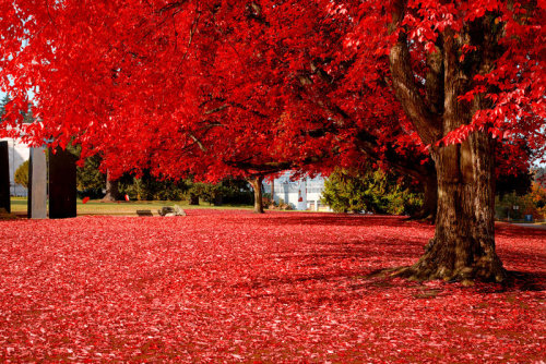 sunsurfer:  Brilliant Red, Olympia, Washington  photo by amixer