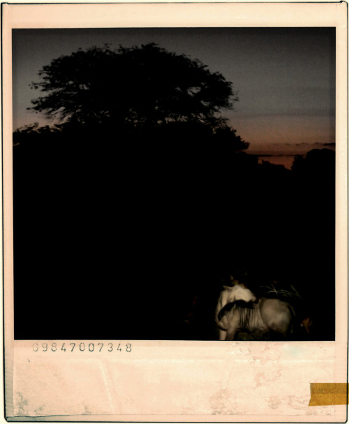 juanhache:  night at Kruger