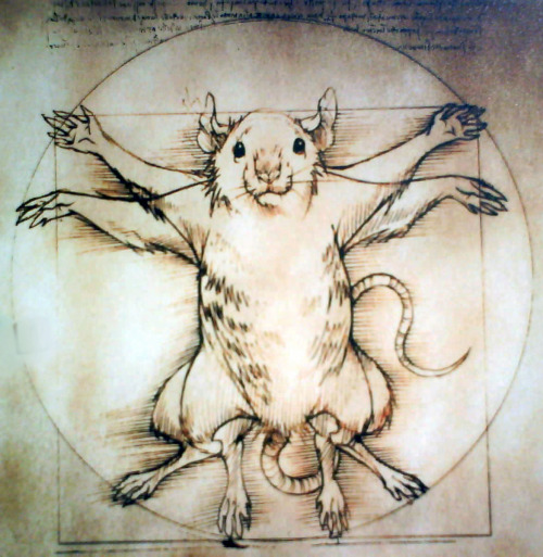 flowerbeast:  the vitruvian rat