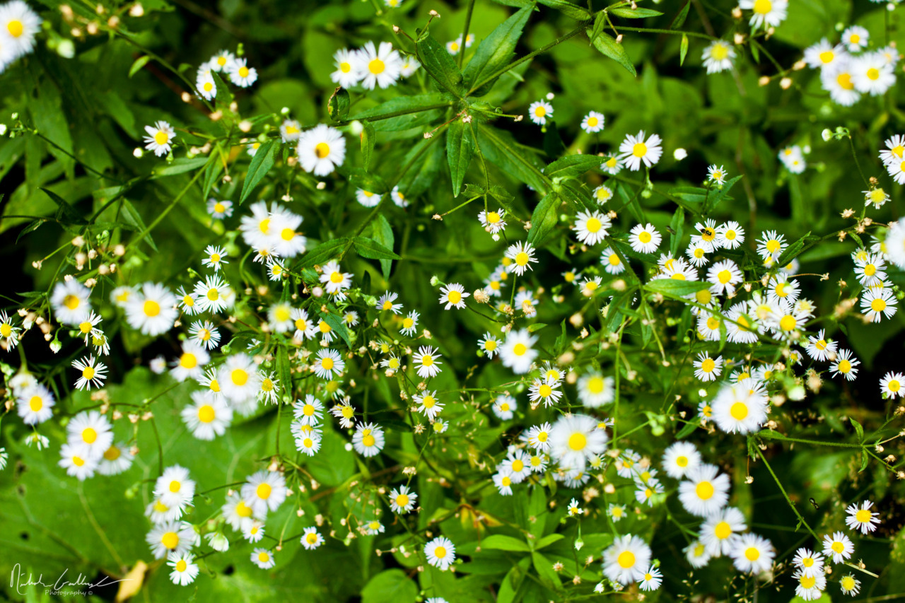 Daisies I can't wait for summer! This 30 degree weather is getting old.