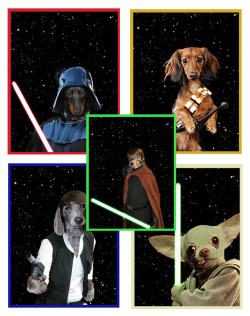 laughingsquid:  Star Wars Dogs