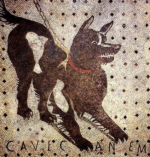 Beware of dog in latin