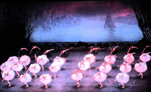 Kirov ballerinas performing Swan Lake earlier this month in Toronto. Mesmerizing. (One day I'm going to get in trouble for taking pictures where I ought not to. However, I didn't use my flash, so I feel ok about this one.)