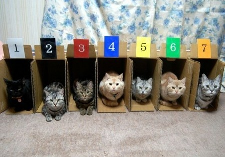 Such a cute picture : How to store cats in your home | Daily Dawdle