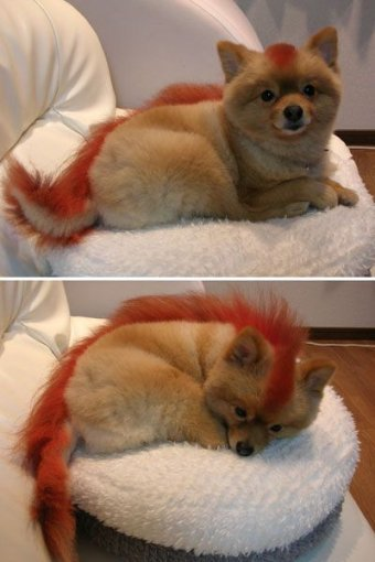 (via things that make you go aahh: The 'real' Firefox)
