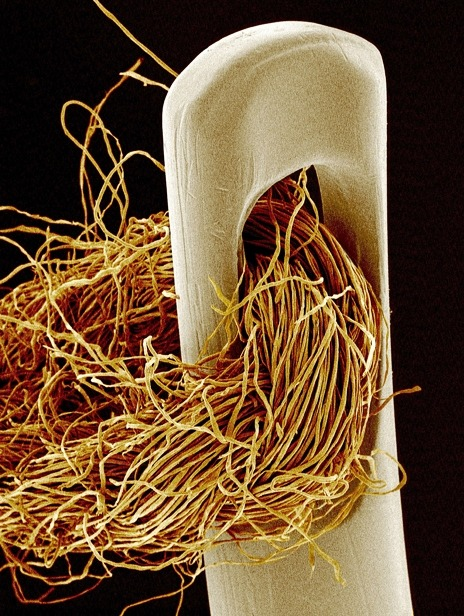 ohscience:  thread in needle