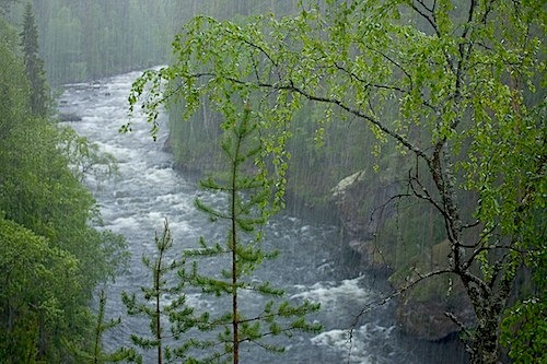 "riverlust:  A river is only the surrendered heart of a million tiny beads of rain.  A river yearns and is yearned for.  A river reaches out and is reached out for.  A river desires, and is desired in its turn. Abdur Rahm, excerpt from ""The Ocean Rests Not …"" Photograph: Rain, Aallokkokoski, Kitka River, Finland.  Photographer: Peter Essick"