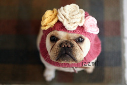 Cute !!! (via Lily's Anti-Firework Dog Balaclava | KnitHacker)