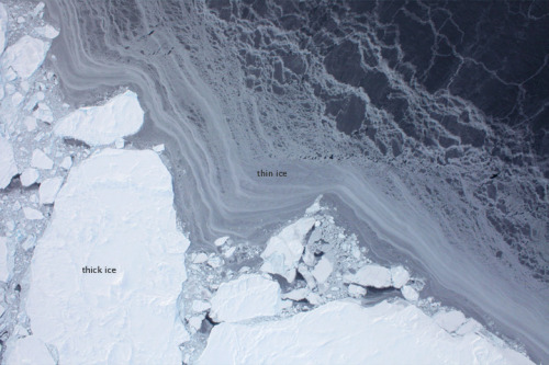 Flying over Arctic Sea Ice The images provide a detailed view of ice floes, separated by dark channels of open water (leads) or thin ice.  (via NASA Earth Observer)
