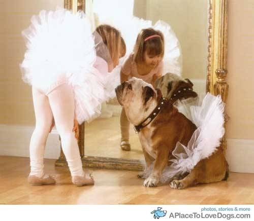aplacetolovedogs:  Bulldog + tutu = BEST.
