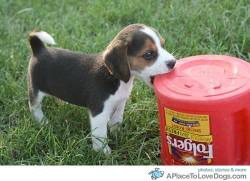 topit You can't fool me, I know this container is full of doggie treats not coffee Original Article