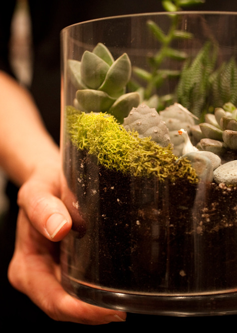 joanbeesly:  DIY terrariums! I so want to do this.