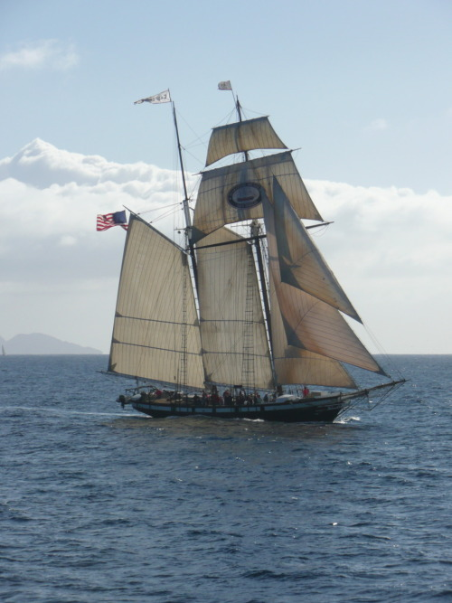 The official tall ship of the state of California, Californian.