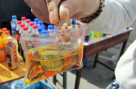In China, live animals such as turtles and fishes are sealed inside plastic pouches to be used as keychains. Exposed to harsh dyes, the animals soon suffocate and die. This is 100% legal and becoming increasingly popular. REBLOG to spread the word and put a stop to this cruel practice.   Seriously people are terrible!