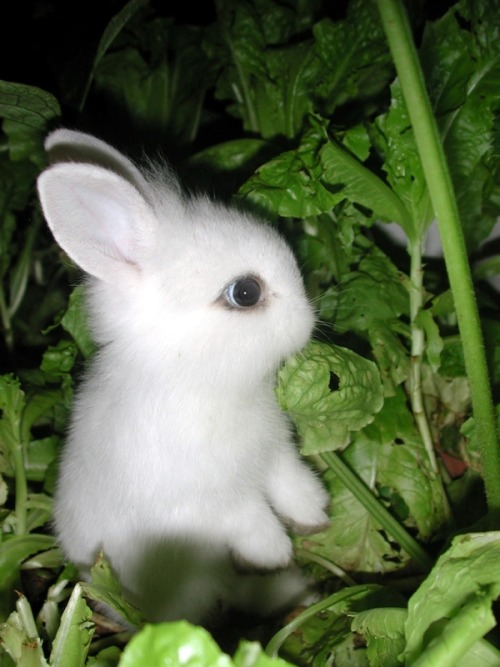 incensewoman:  Cute bunny rabbit.     Way too cute!