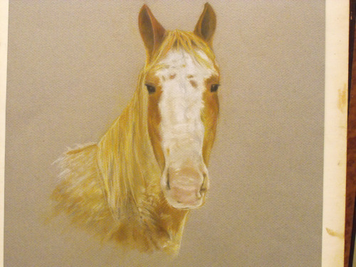 Raffity, a horse portrait commission I just completed. Go to www.denyerdesigns.com to contact me for your own portrait. You can also find me on etsy.com/shop/buddyschild! © JP Denyer/ DenyerDesigns