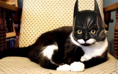 Dear Batman Cat, Awesomeness and LOL called, they want to thank you for allowing them to exist. From your friend, Zoe
