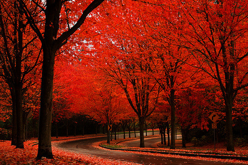 incubi:  upharsin: (by PhotoScenics)  I want autumn again. Thank you.